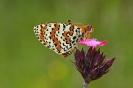 Биодиверзитет - Biodiversity